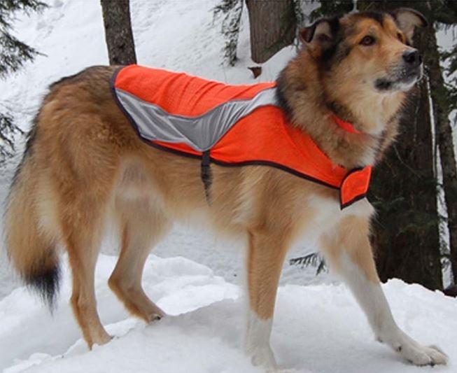 Canine Friendly - Dossard de Chasse pour Chien - Orange