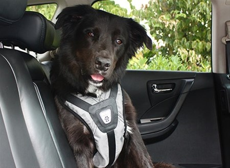 canine friendly ceinture de s curit pour chien animobouffe. Black Bedroom Furniture Sets. Home Design Ideas